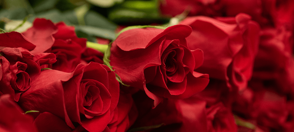 0204 ROSES RED